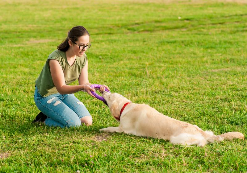 Woman training her dog golden retriever in the park royalty free stock photos