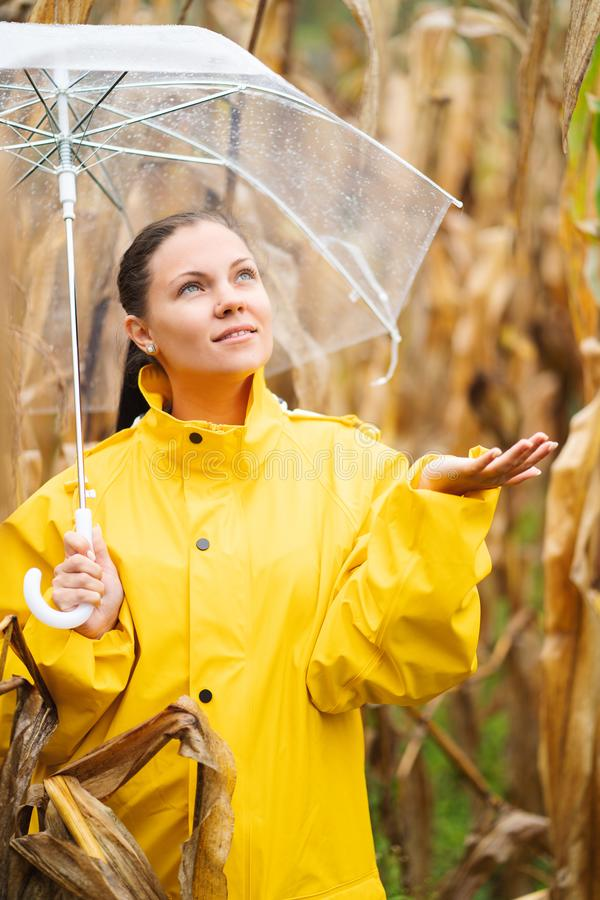 Pretty caucasian young girl in yellow raincoat standing in corn field with transparent umbrella. Woman checks if it is royalty free stock photos
