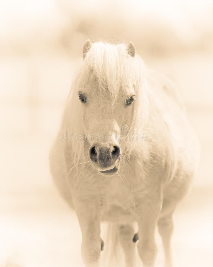 Pretty Chubby Pony stock images