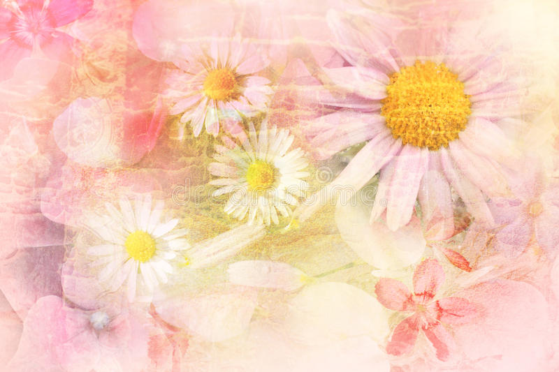 Pretty daisies artistic background vector illustration