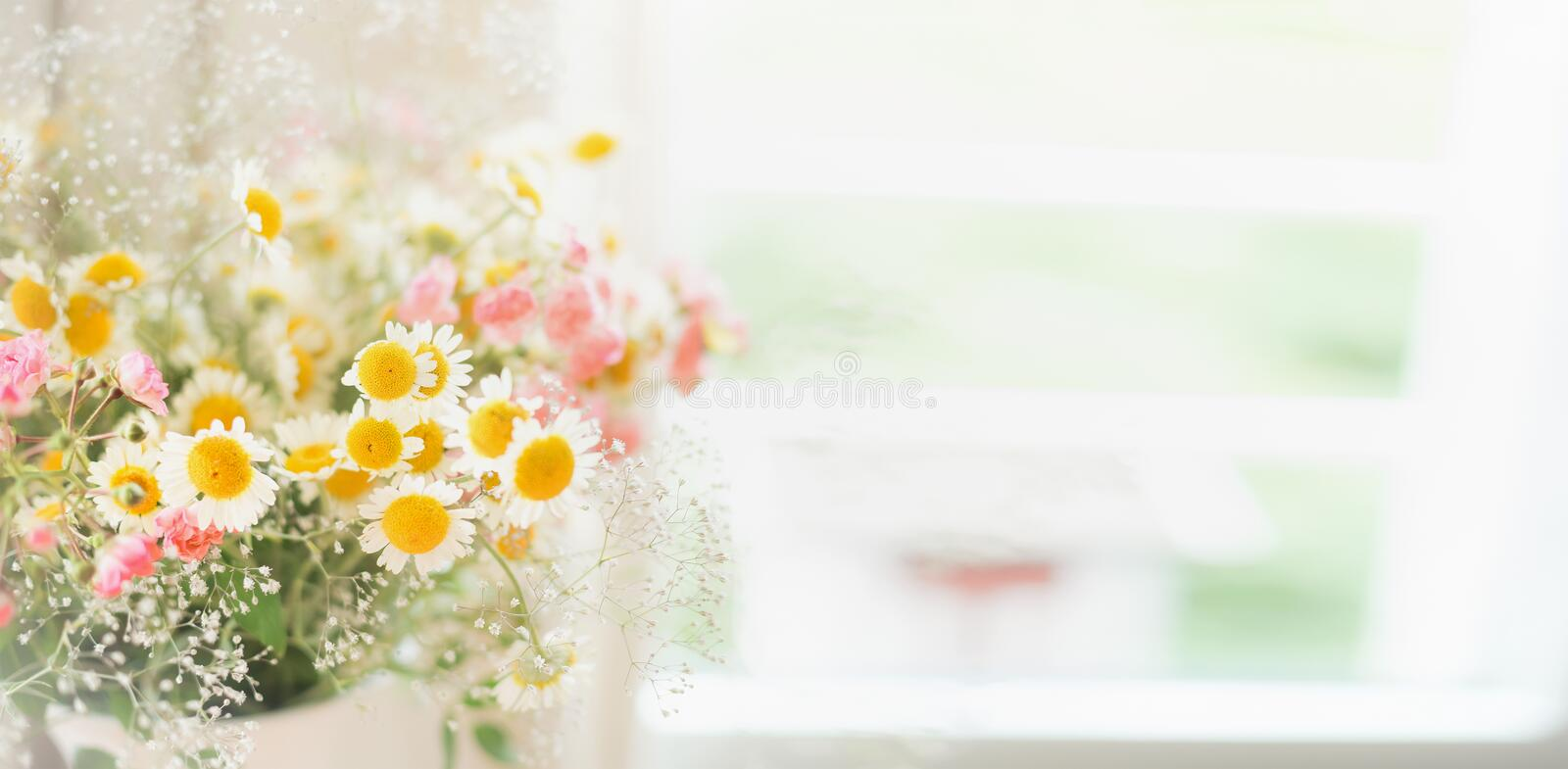 Pretty daisies bunch at window, close up royalty free stock photo