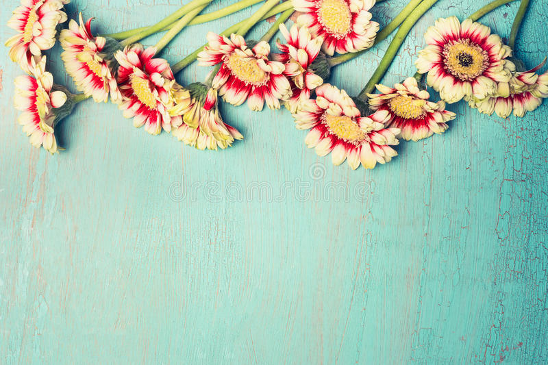 Pretty daisies or gerbera flowers on turquoise blue shabby chic background , top view, border. Festive greeting or invitation card, horizontal royalty free stock images