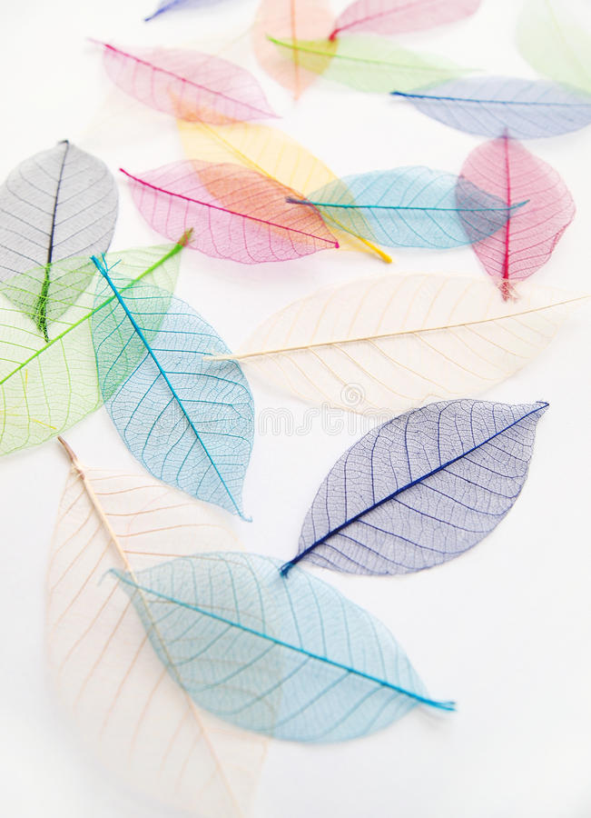 Pretty dried colorful leaves stock photography