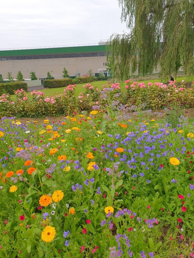 Pretty floral assortment Botanic Gardens, Belfast stock photos