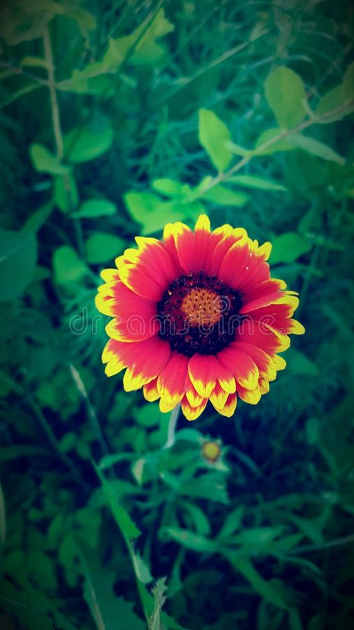 Pretty flower royalty free stock images