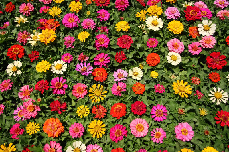 Pretty flowers background stock photo image of close 25206614 diffrent color fresh flowers background mightylinksfo