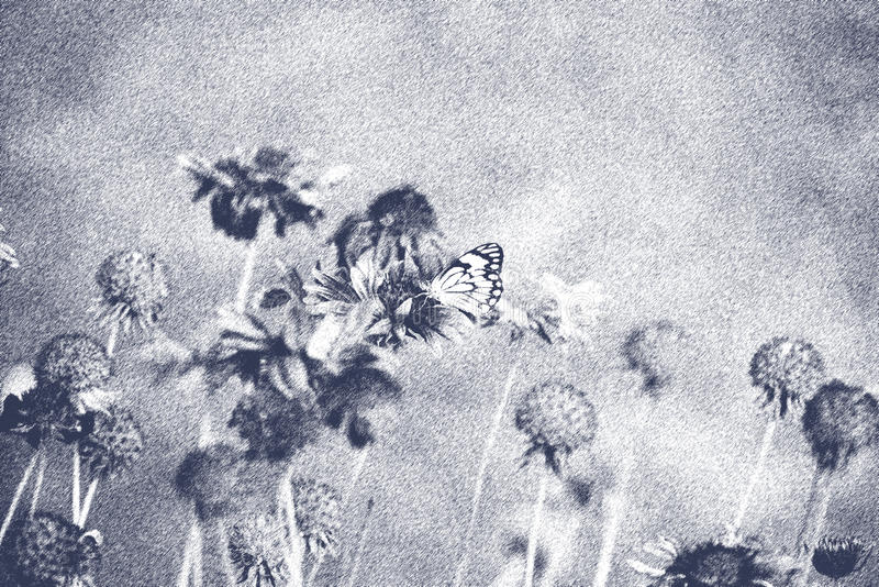 Pretty flowers with butterfly in black and white brush art form stock image