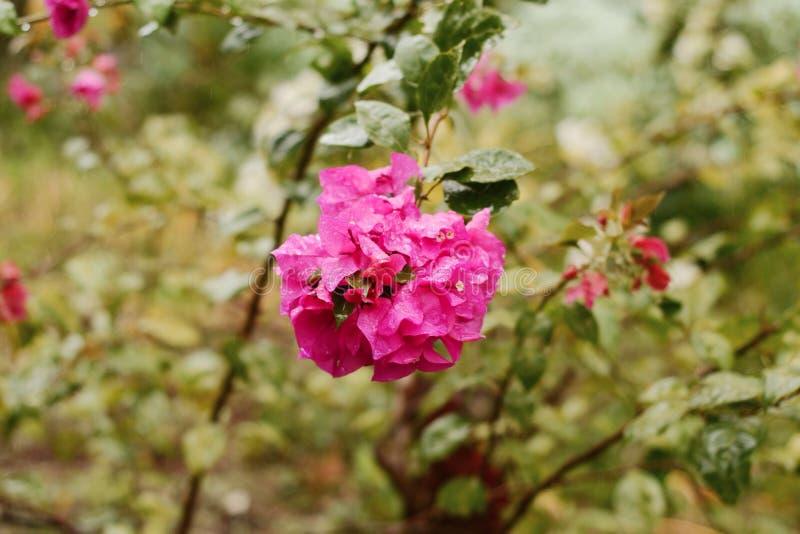 Pretty flowers stock photos