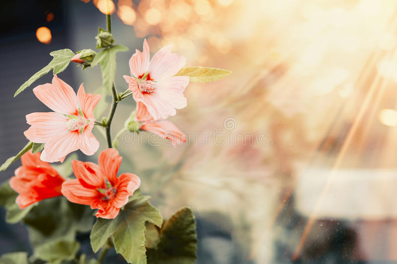 Pretty flowers in sunset light and bokeh, outdoor stock photos