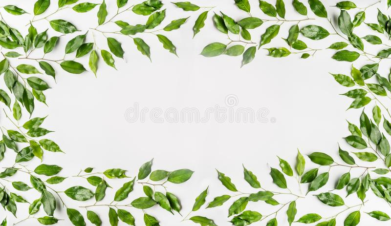 Pretty Frame made of green branches and leaves on white background. Flat lay, top view, horizontal royalty free stock photo