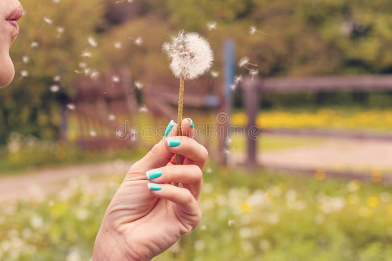 Pretty girl blowing dandelion in summer park. Green grass beautiful nature. royalty free stock images