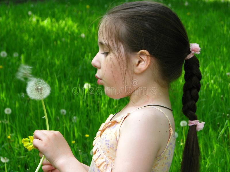 Pretty girl with a dandelion stock image