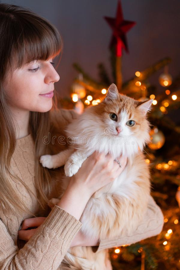 Pretty girl embraces fluffy red and white cat on Christmas tree background. Decorating Natural Danish spruce at home. Winter holidays in a house interior royalty free stock image