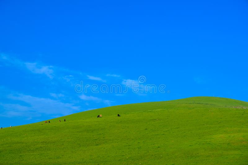 Meadow with beautiful blue sky background with copy space. Pretty green Meadow with beautiful blue sky background with copy space royalty free stock photography