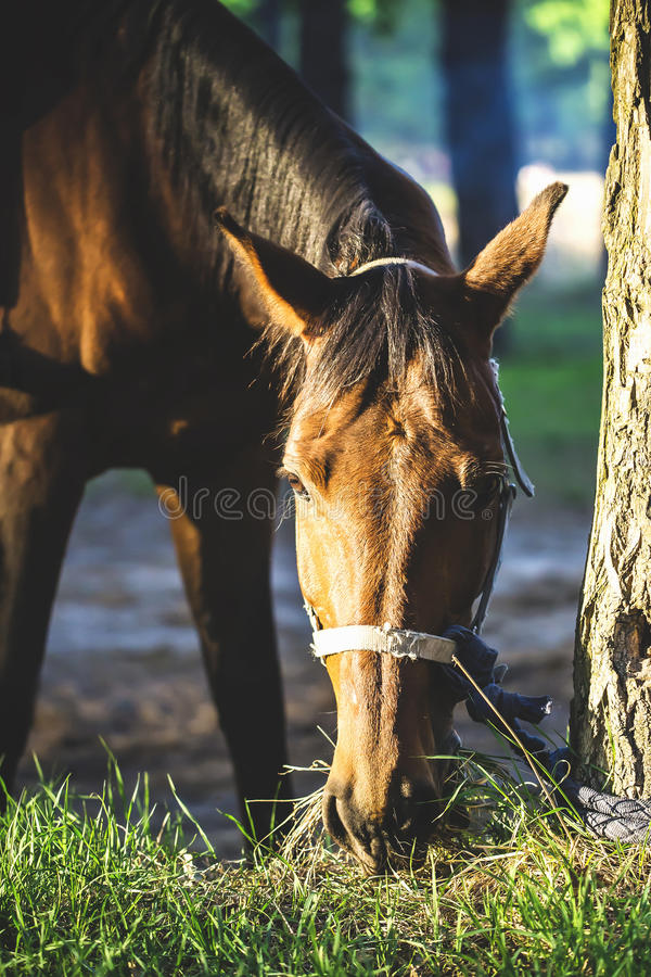 Pretty horse royalty free stock image