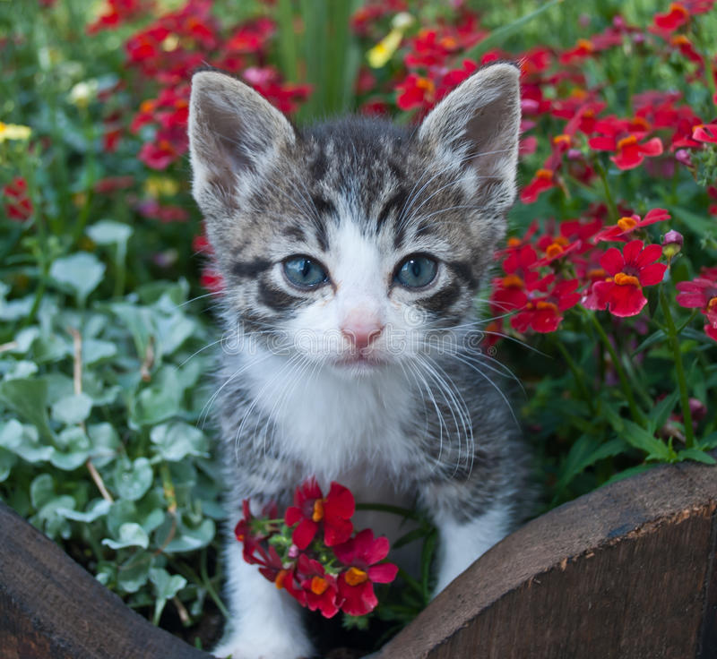 Free Pretty Kitty Royalty Free Stock Image - 54951096