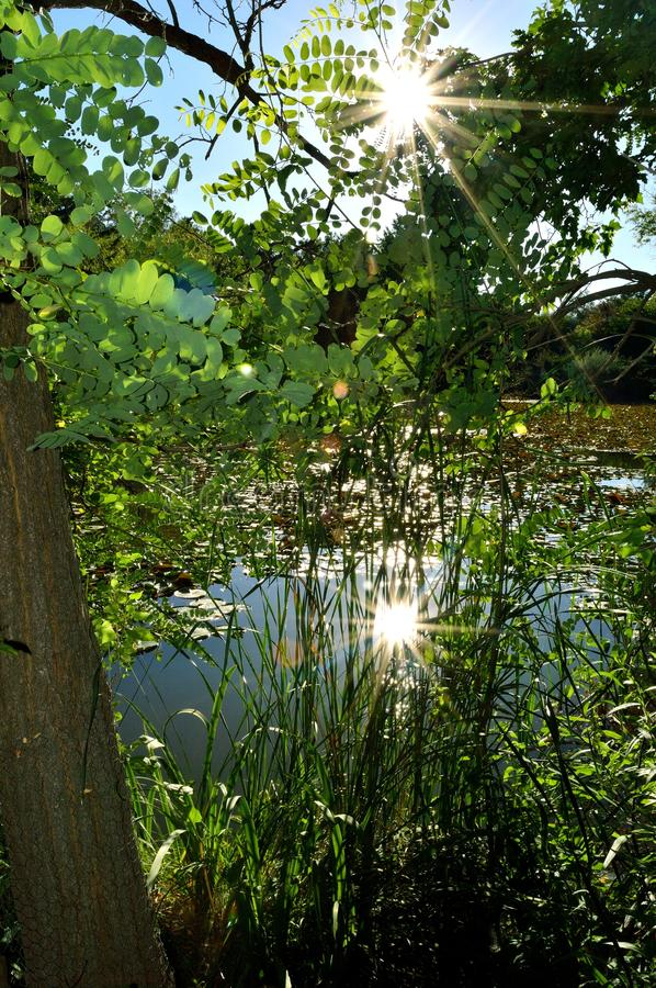 Download Sun Reflection Through Trees On Pond Stock Image - Image of thetinyphotographer, wildlife: 107919331