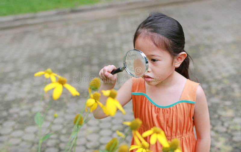 Pretty little Asian child girl with magnifying glass looks at flower in summer park royalty free stock photo