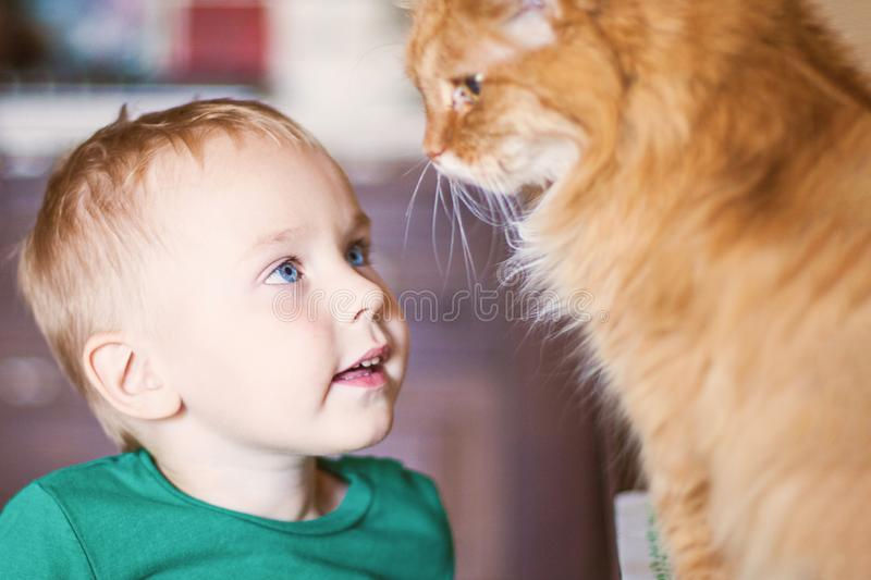 Pretty little caucasian baby boy with blonde hair, bright blue eyes and red cat look at each other royalty free stock images