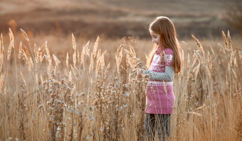 Pretty little girl in an autumn field. Pretty little girl in a field in autumn at sunset stock images