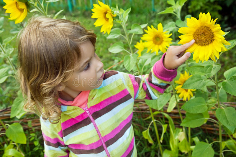 Pretty Little Girl looks at sunflower in garden. Summer royalty free stock image