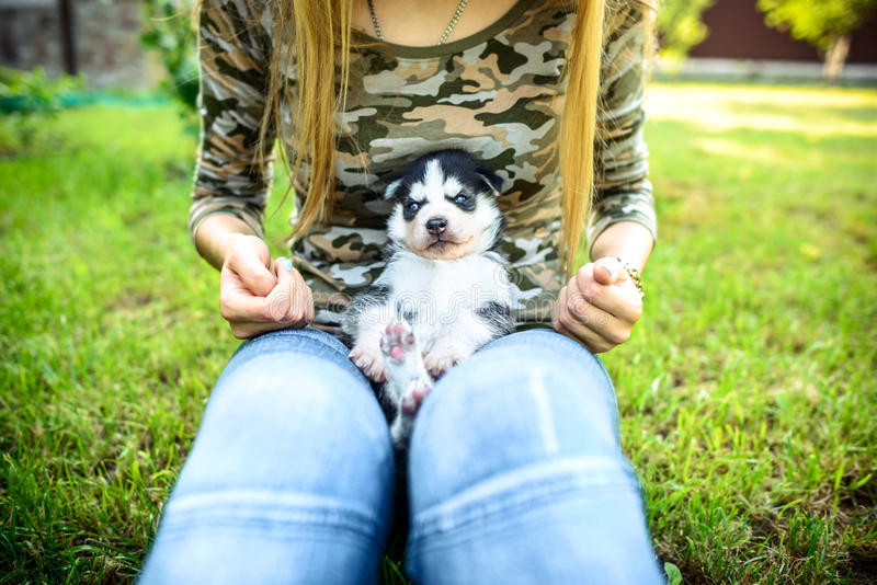 Pretty little husky puppy outdoor in womans hands. Little prety husky puppy outdoor in womans hands stock image