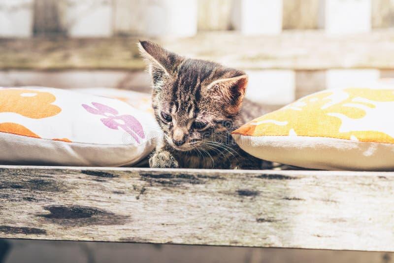 Pretty little tabby kitten lying amongst cushions stock images