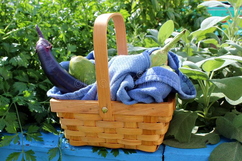 Pretty little wicker basket filled with fresh fruits and vegetables of Summer royalty free stock photos