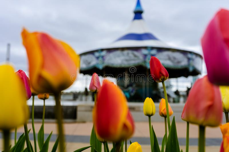 Flowers next to Mary - Go - Round. Pretty Mary - Go - Round with flowers in frame stock photos