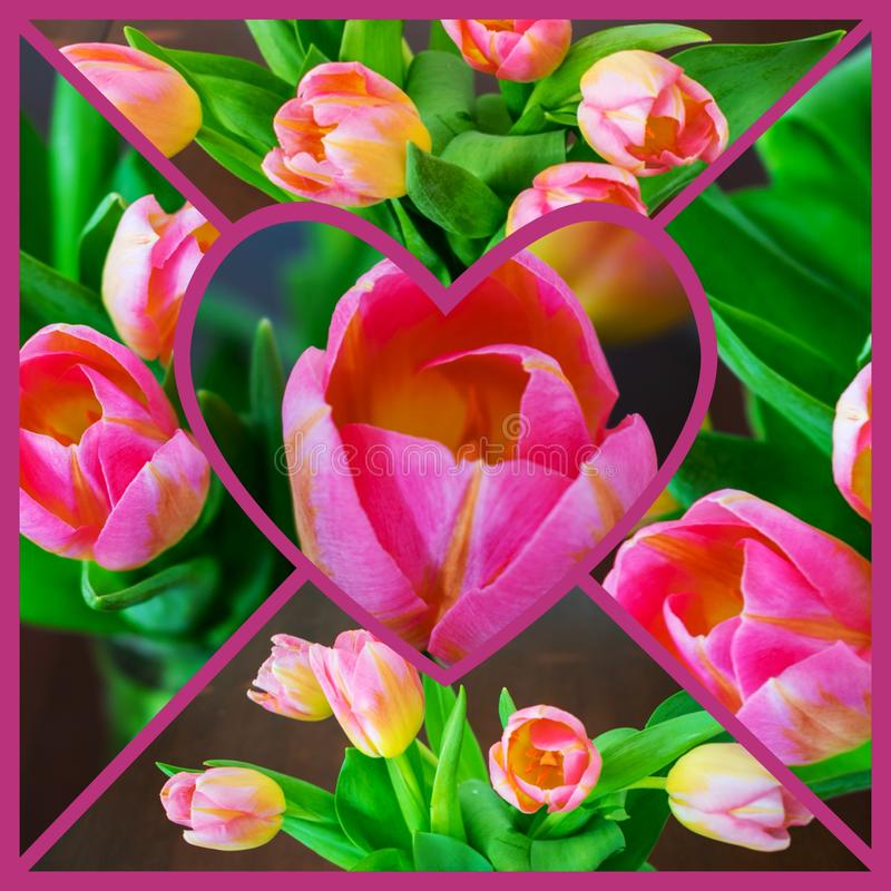 Mosaic of Pink Tulips with Heart in Center stock photography