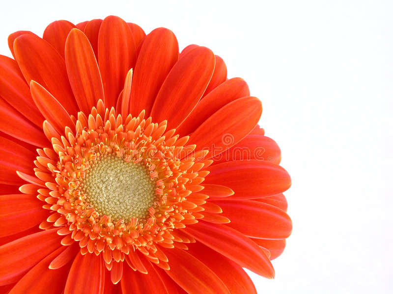 Pretty in orange stock images