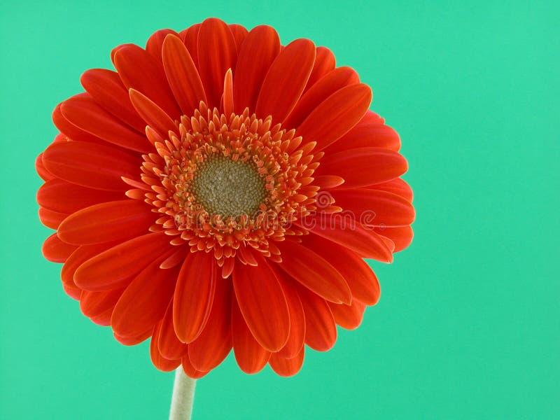Pretty in orange stock photos