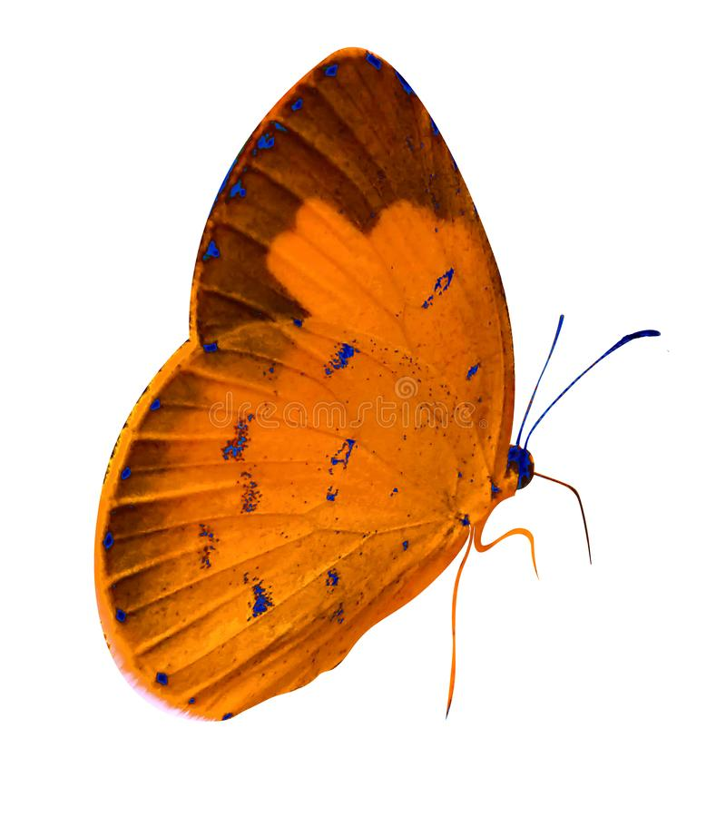 Pretty orange butterfly with white background. Pretty cute small animal orange butterfly with white background only stock illustration