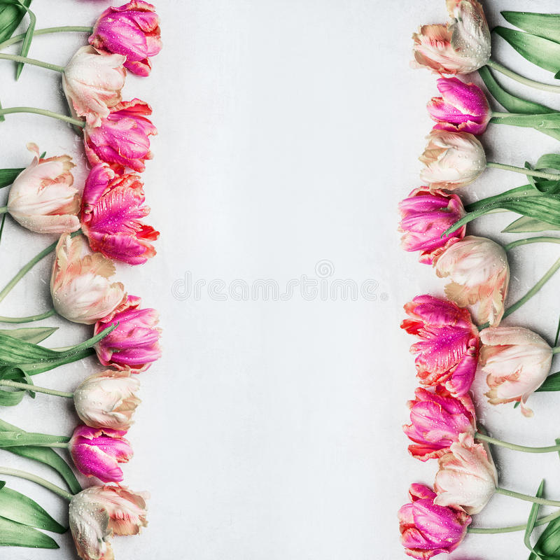 Pretty pastel color tulips with water drops, floral frame, top view. Spring flowers stock photography