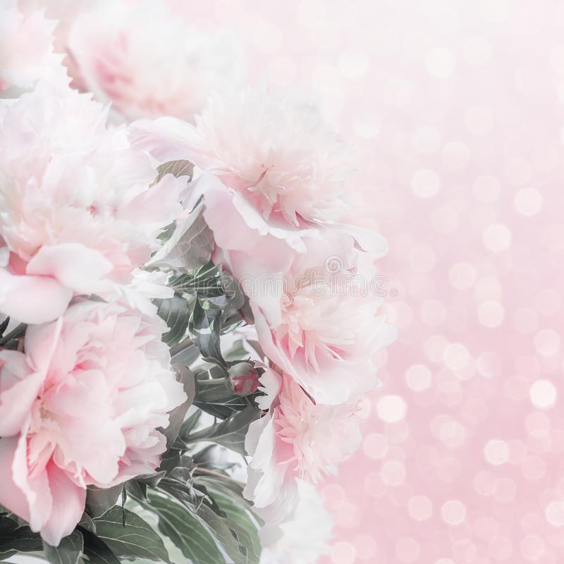Pretty pastel pink peonies floral border with bokeh. Layout or greeting card for Mothers day royalty free stock images