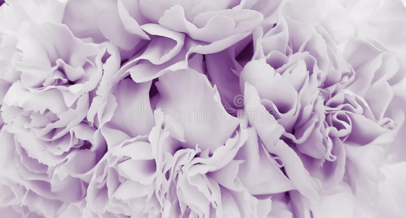 Pretty peony petal flowers background royalty free stock photo