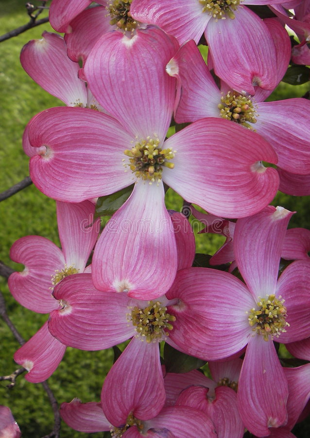 Download Pretty in Pink stock image. Image of trees, nature, blossoms - 115973