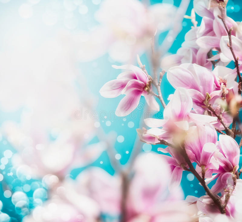 Pretty pink blossom of magnolia tree at blue sky background. Close up stock images