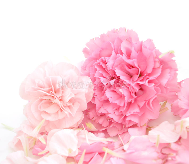 Pretty Pink Carnations Background stock image