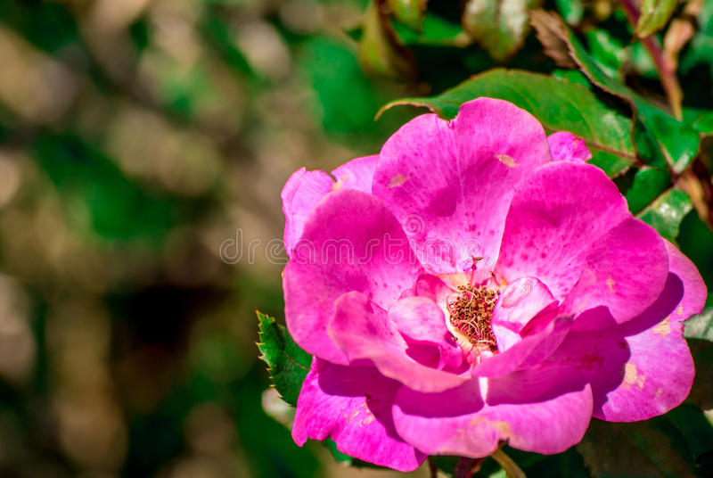 Pretty pink flower stock photography