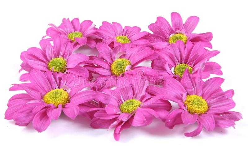 Pretty pink flowers. stock images