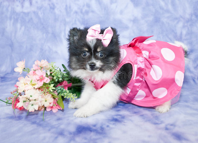 Pretty Puppy royalty free stock images