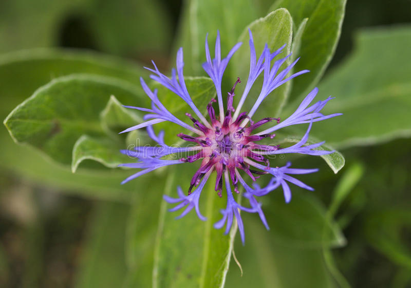 Download Pretty purple flower stock image. Image of background - 33069131