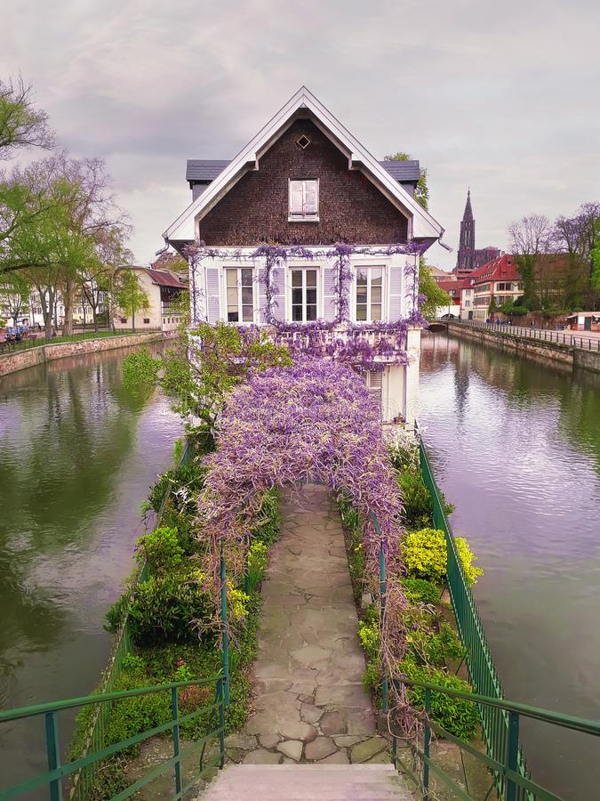 Pretty purple flowering wisteria covering an arched arbor leading to an old house on a canal island in Petite France, Strasbourg,. Wonderful purple flowering royalty free stock image