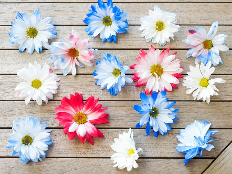 Pretty Red White and Blue Patriotic Colored Daisy Flowers Scattered on a Wood Table Background. It`s a horizontal photo with fla royalty free stock image
