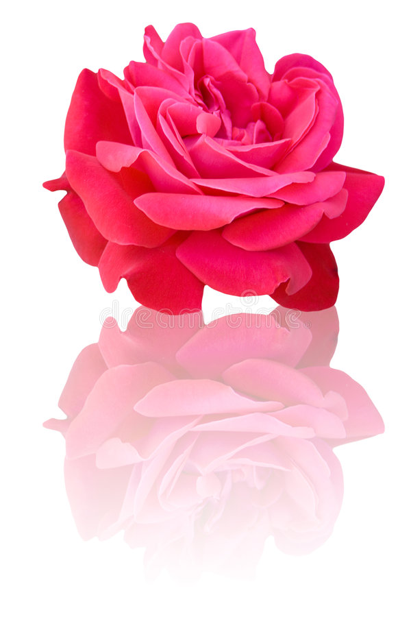 Free Pretty Rose Stock Image - 5274831