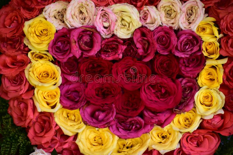 Pretty Roses in a Red, White and Pink mixed flowers stock photography