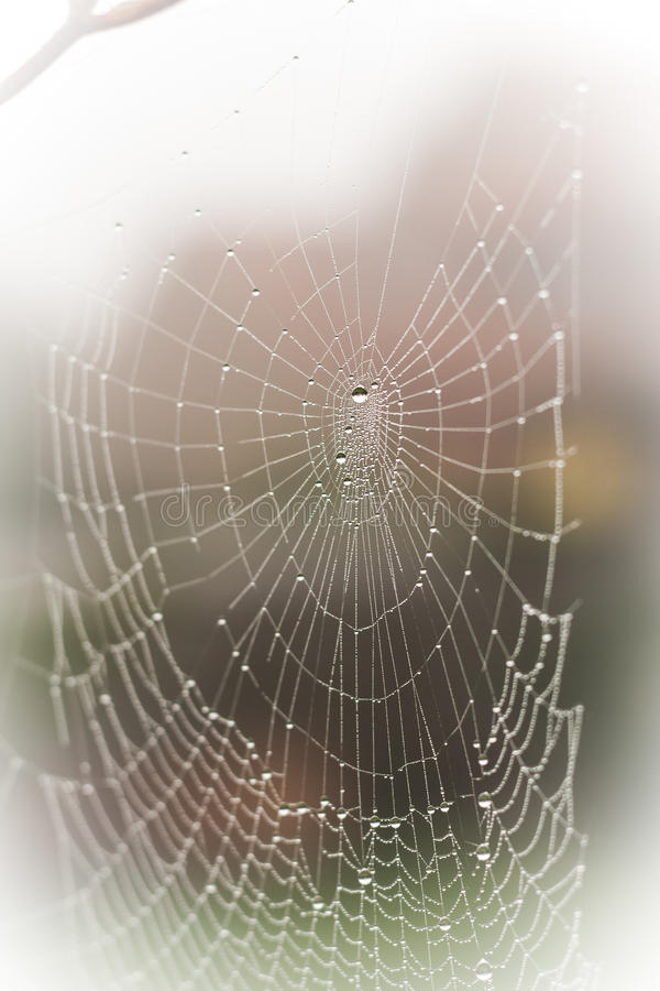 Download A Pretty Scary Frightening Spider Web For Halloween Stock Photo - Image: 33255300