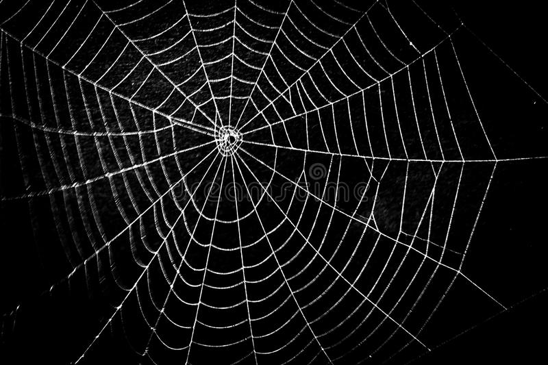 Download A Pretty Scary Frightening Spider Web For Halloween Stock Photo - Image: 33255392