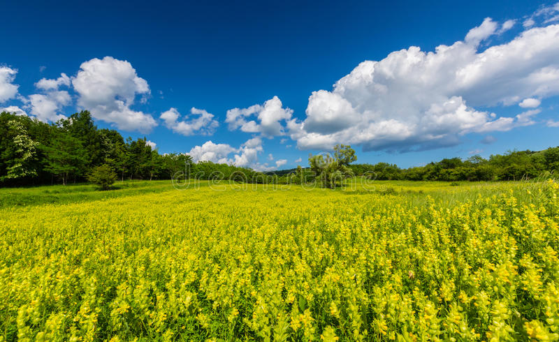 Pretty scenery with wild meadow and yellow flowers in spring stock download pretty scenery with wild meadow and yellow flowers in spring stock photo image of mightylinksfo Gallery